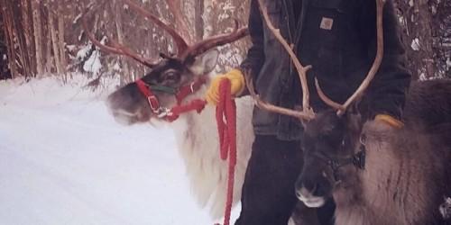 Reindeer beer HooDoo Fairbanks Alaska
