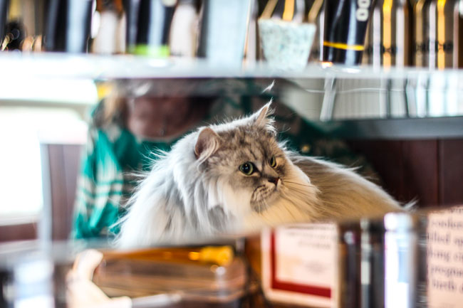 Caturday HooDoo Brewing Co. Fairbanks Alaska